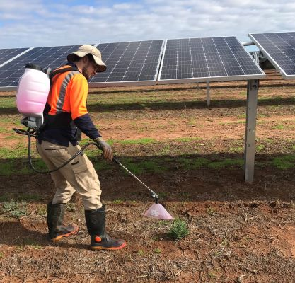 Pirie solar weeds 2 small